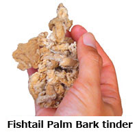 Fishtail Palm tender.