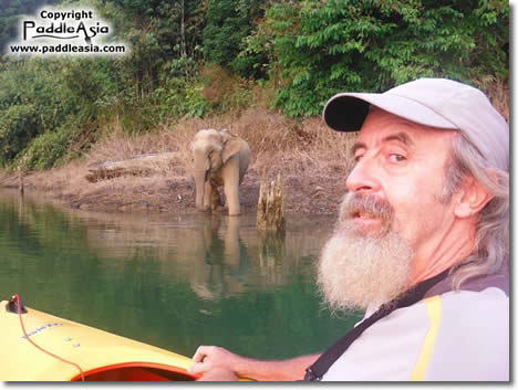 Dave Williams kayaking and a wild baby elephant checking him out, Khao Sok National Park.