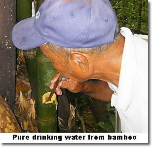 Thailand jungle survival water in bamboo